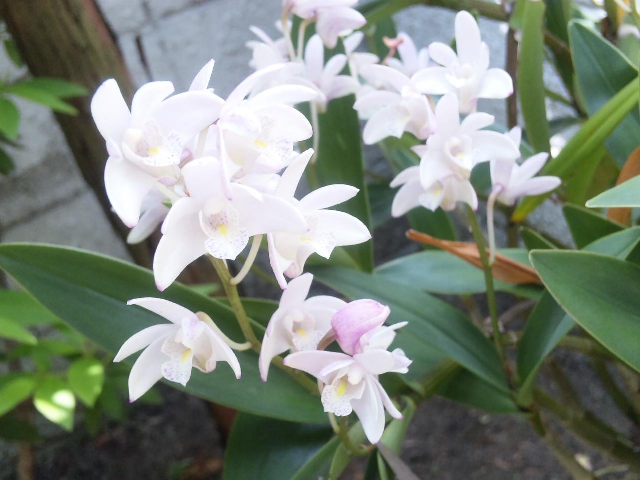庭先のお花